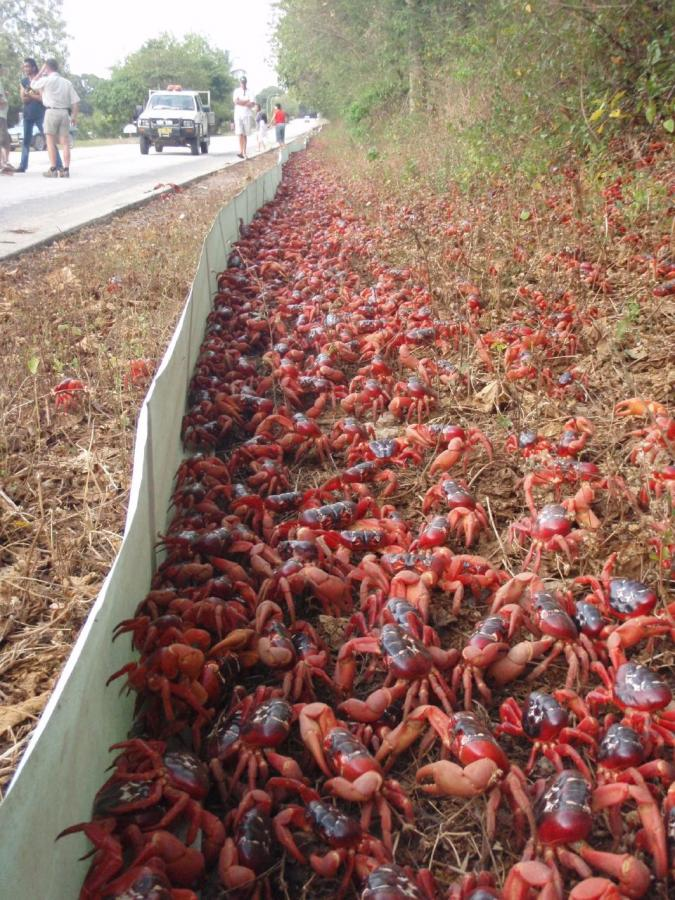 VK9XG Red Crab Superhighway, Christmas Island. DX News