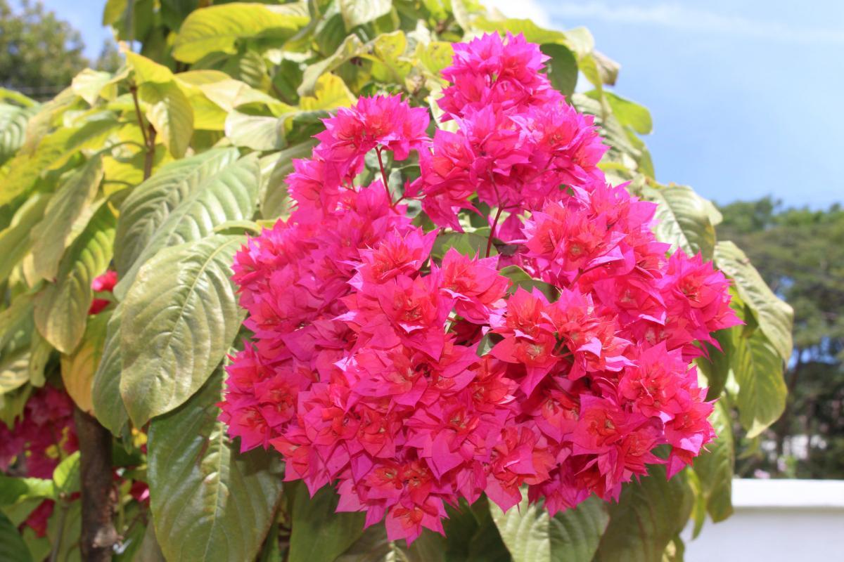VP2MLB VP2MSA VP2MSK VP2MZN Flowers, Montserrat Island. DX News