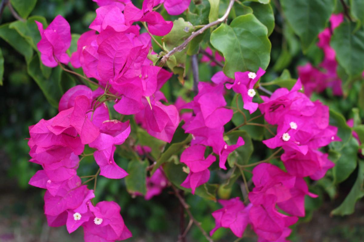 VP2MUW Flowers, Montserrat Island. DX News
