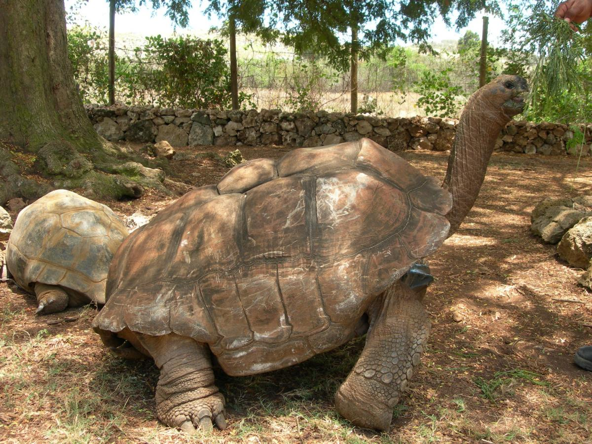 3B9AN 3B9/F8AAN Turtle, Rodrigues Island Tourist attractions spot