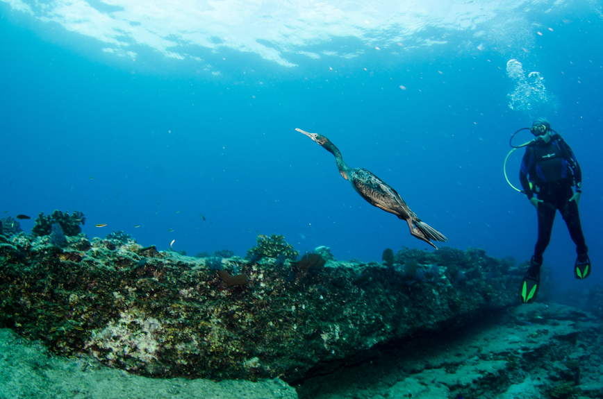 Bonaire Island PJ4S Tourist attractions Diver and underwater world