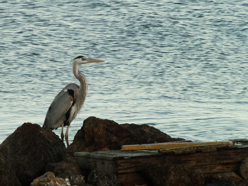 XF1IM DX News Bird, Magdalena Island, Baja Mexico, Mexico