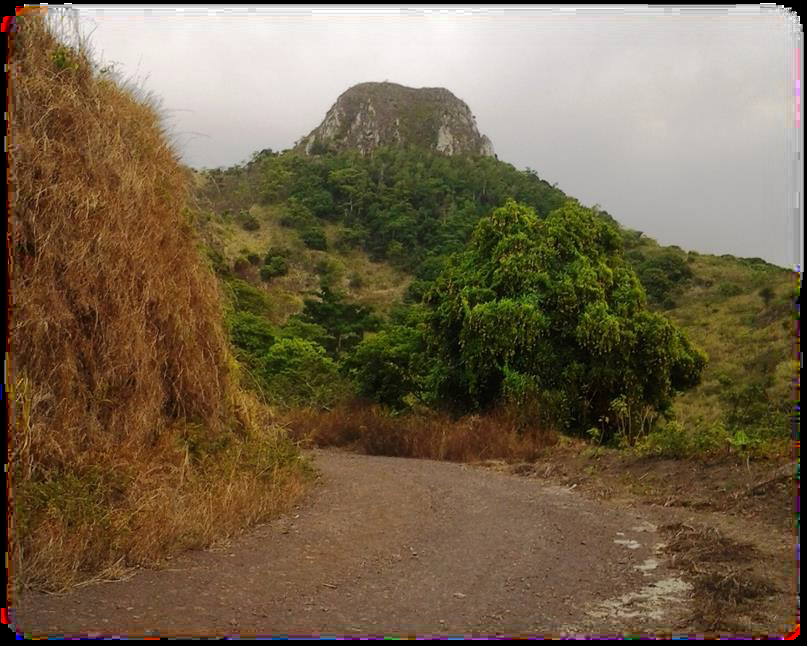 Path to the mountaintop and wild mango tree Annobon Island