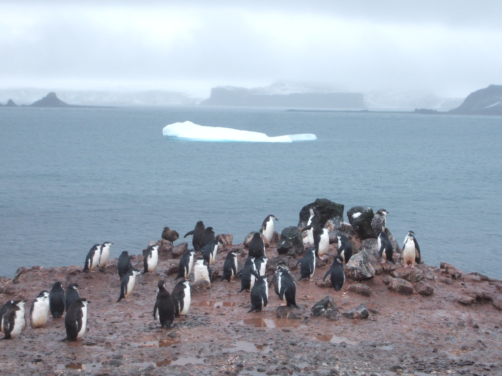 RI50ANO Penguins, Aitcho Island, South Shetland Islands. Tourist attractions spot