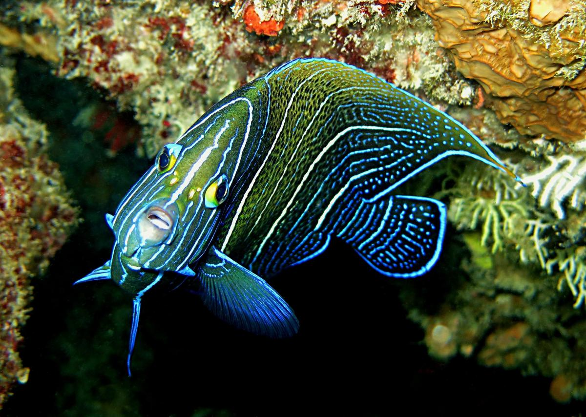 S79ES Angelfish, Praslin Island, Seychelles. Tourist attractions spot