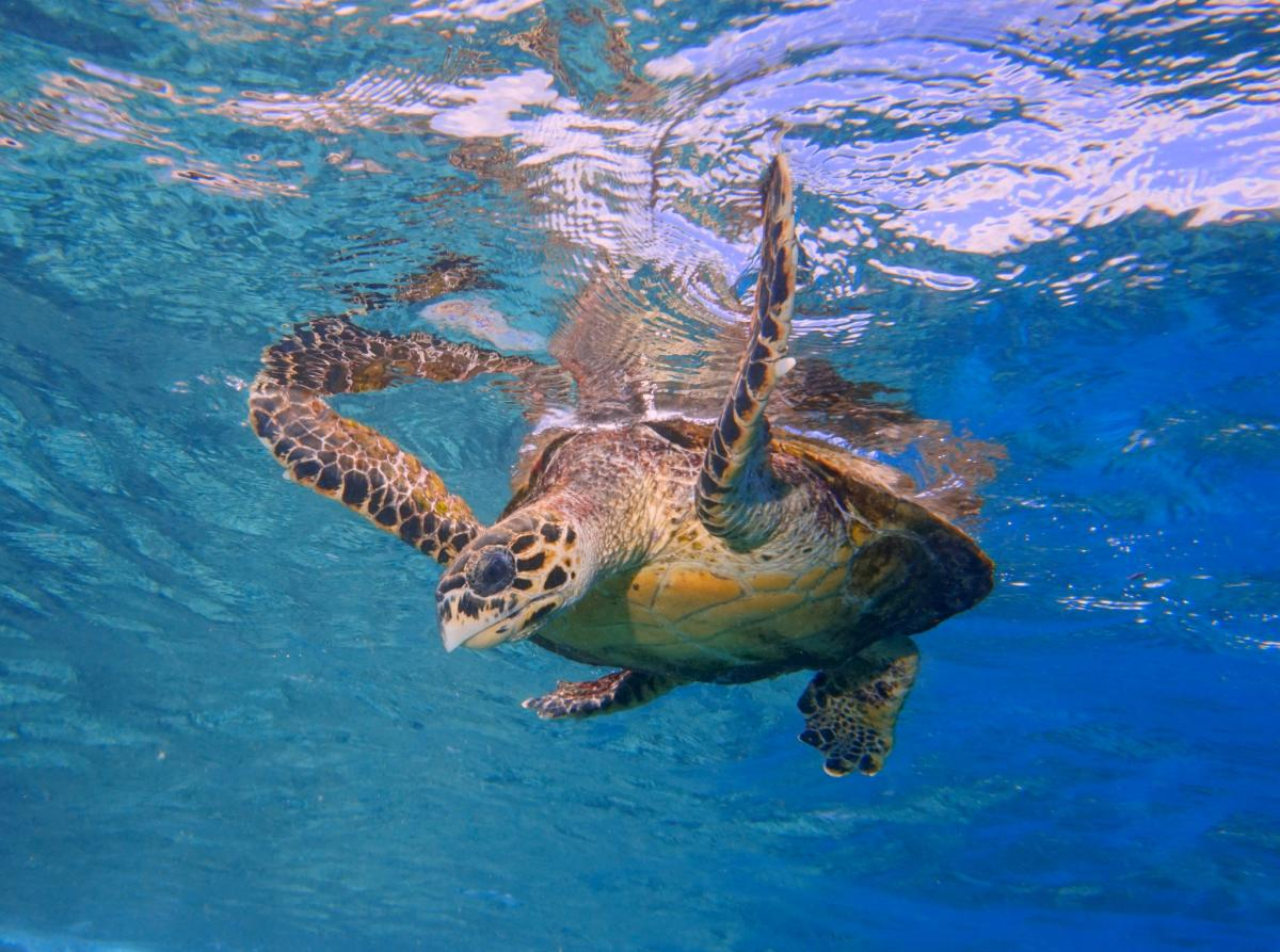 S79ZM Turtle, Seychelles DX News