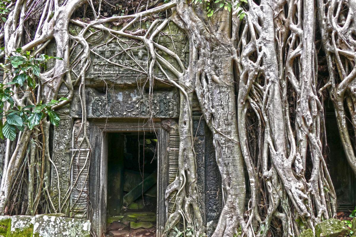XU7AEY Ta Prohm, Siem Reap, Cambodia. Tourist attractions spot.