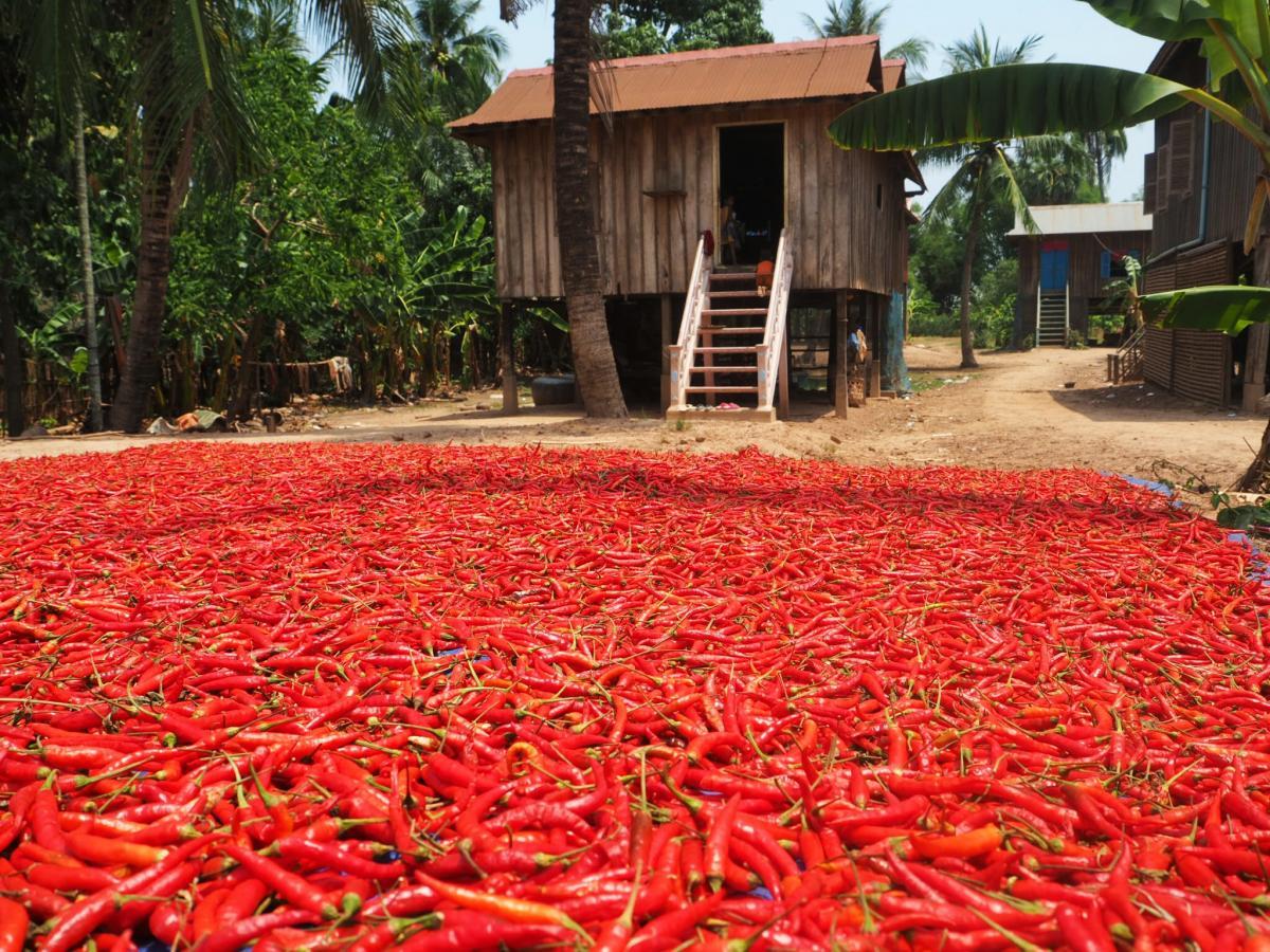 XU7AKL Ват Нокор, Камбоджа. Туристические достопримечательности.