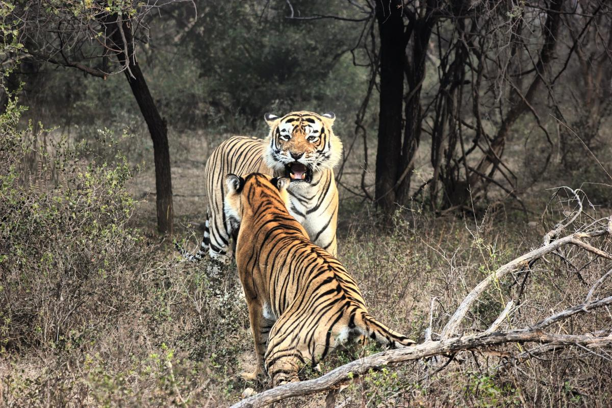 VU2RBQ Ranthambore National Park, India. DX News