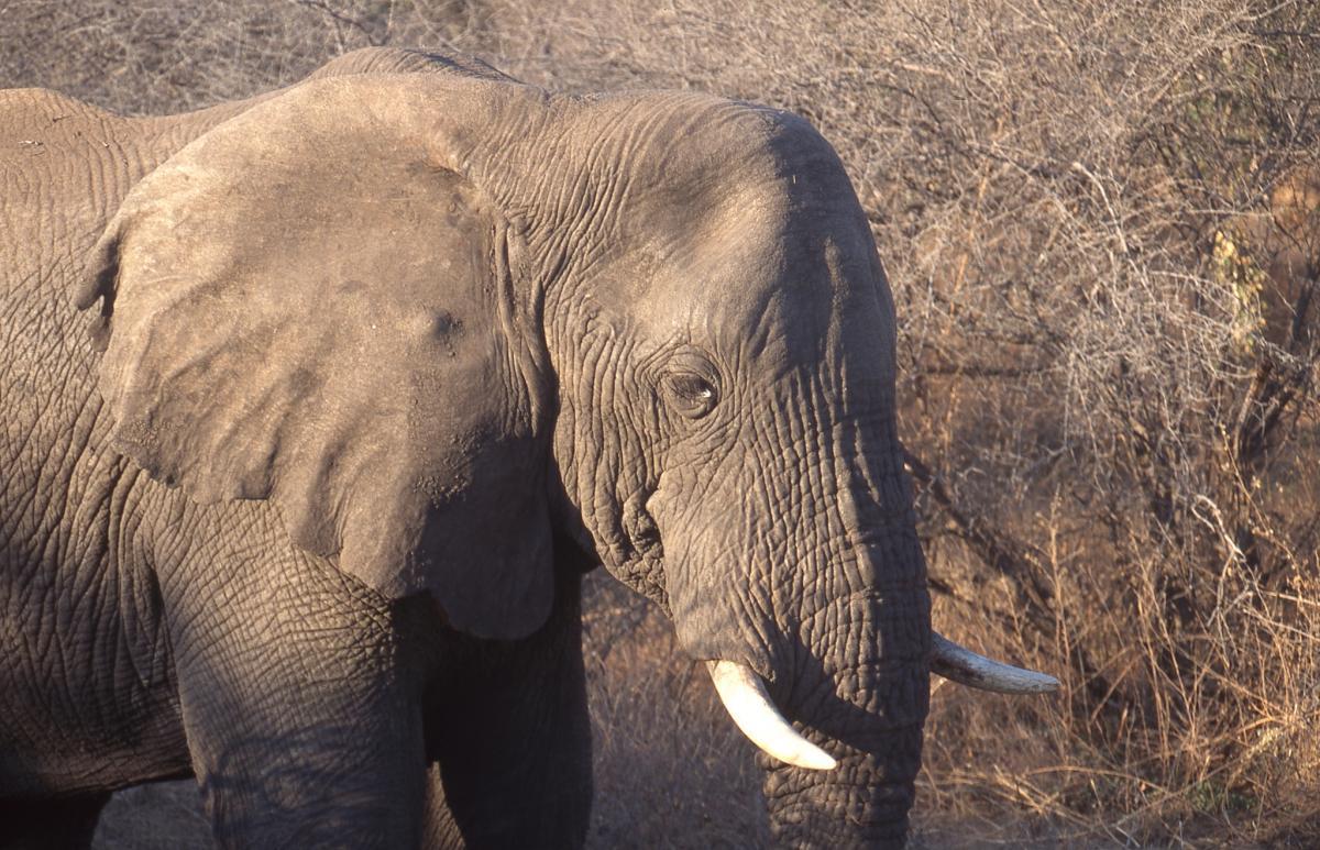 Z22VC Слон, Зимбабве DX Новости