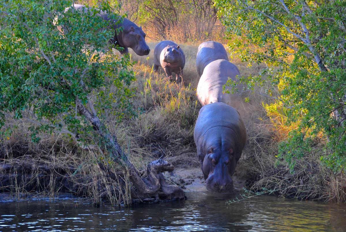 Z2LA Zambesi River, Zimbabwe. Tourist attractions spot