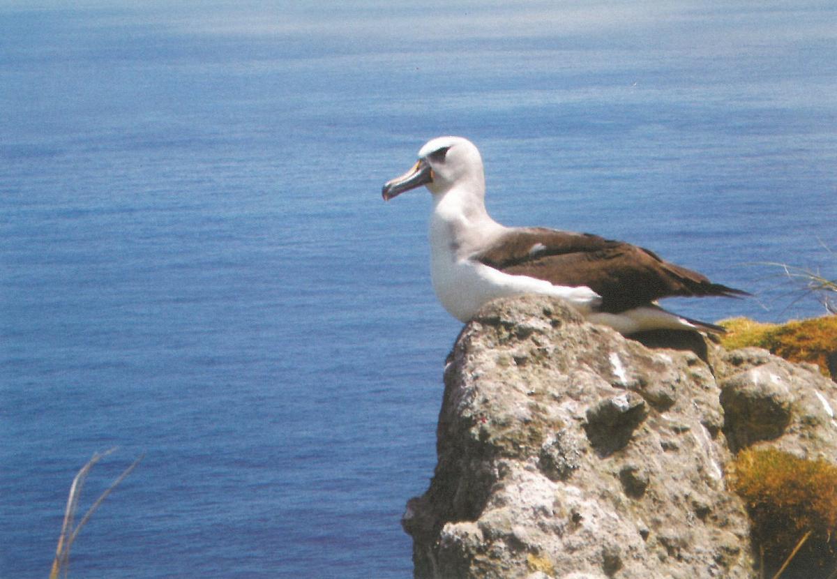 ZD9EI Tristan da Cunha Tourist attractions spot