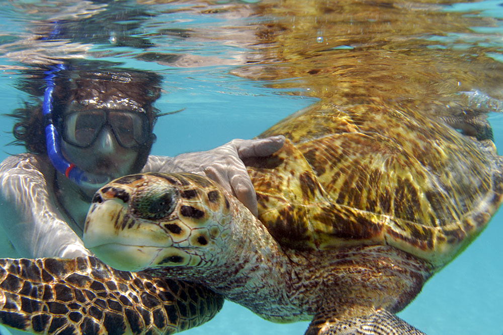 Atoll das Rocas ZV0R Tourist attractions spot